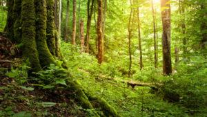 Aufnahme in einem lichtdurchfluteten Waldstück