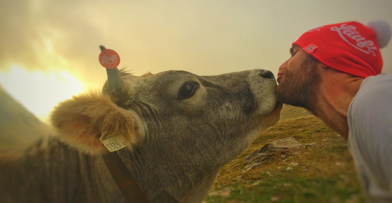 Langbräu Kuh läuft
